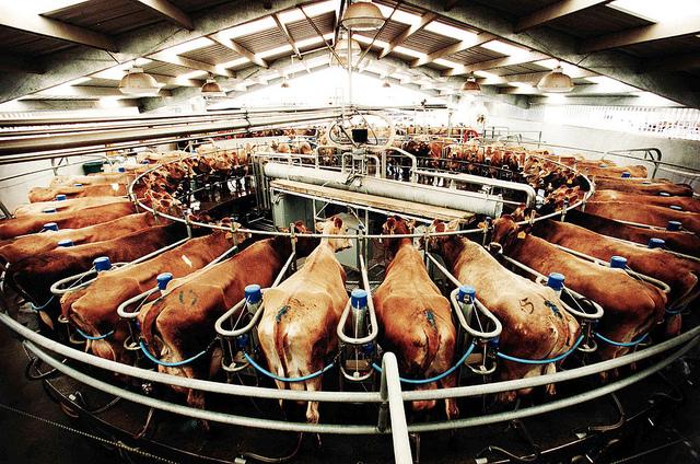 Photos | Animal Cruelty Exposure Fund