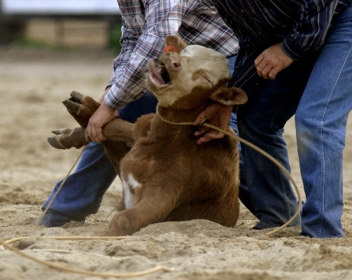 rodeo-calf-roping-small_0