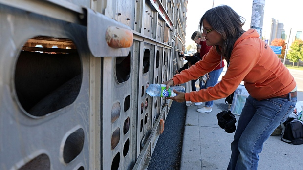 Anita Krajnc gives water to dehydrated animals.