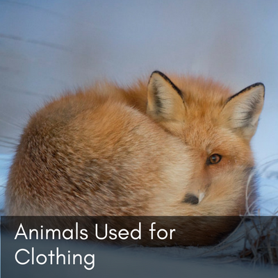 Animals Used for Clothing
