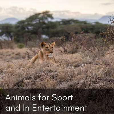 Animals for Sport and In Entertainment