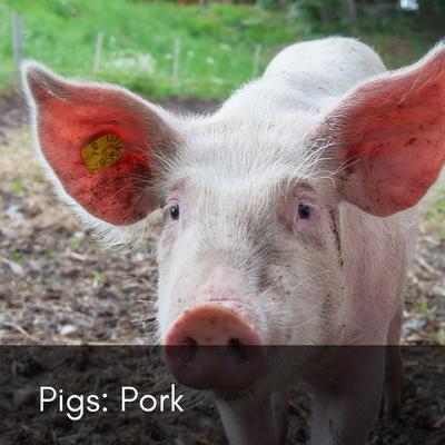 Pork - Pigs