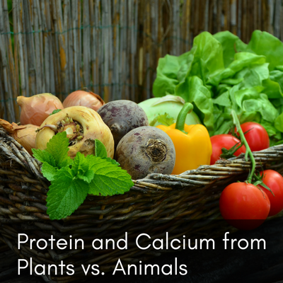 Protein and Calcium from Plants vs. Animals